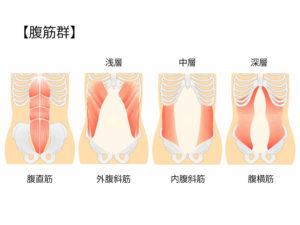 反り腰の人が鍛えるべき腹筋、腹横筋