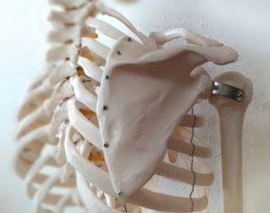 肩甲骨がゴリゴリ