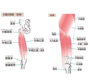 膝が痛い時のストレッチする筋肉